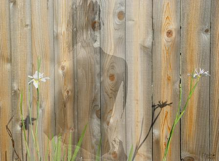 back-fence.jpg